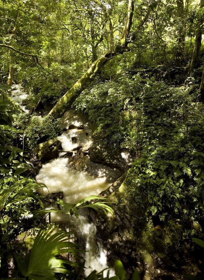 Flusso della foresta pluviale fotografie stock