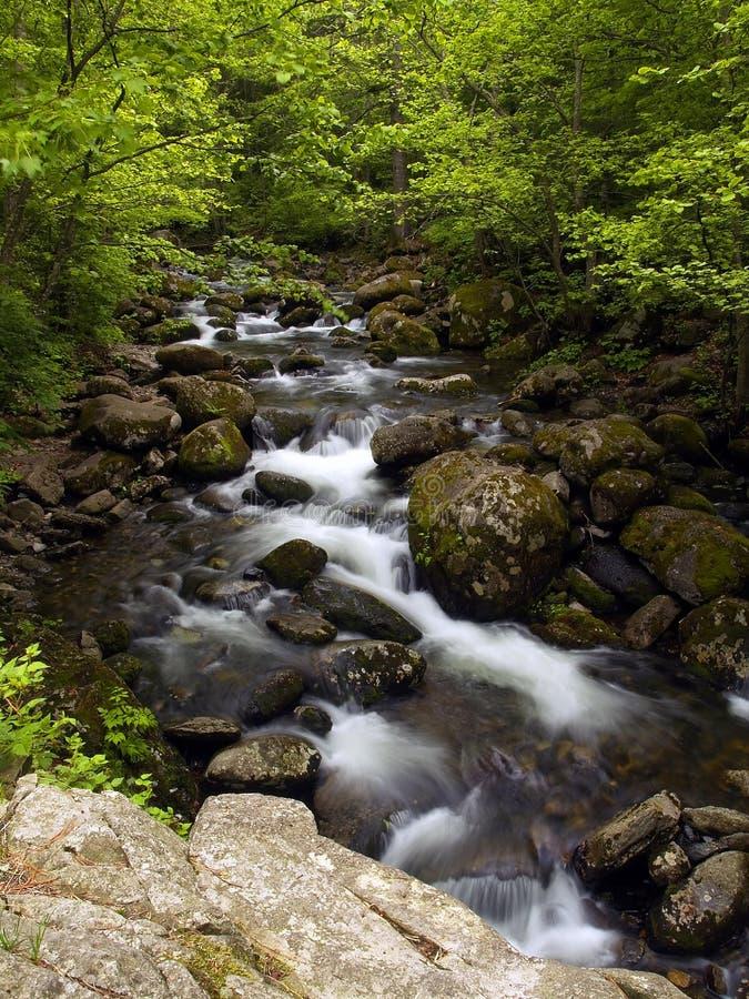 Flusso della montagna della foresta di estate fotografia stock libera da diritti