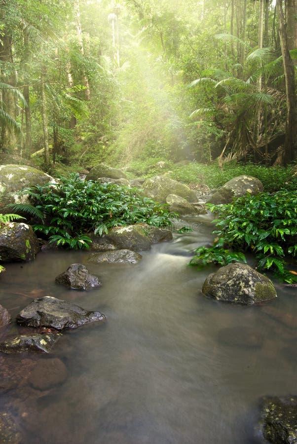 Flusso della natura della foresta pluviale   immagini stock