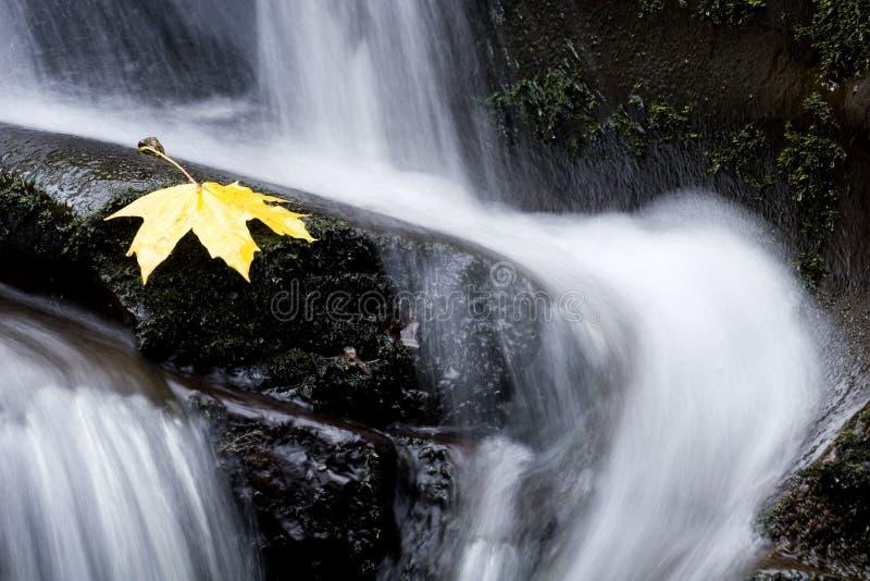 Flusso di autunno immagine stock libera da diritti