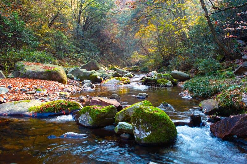 Flusso di autunno in foresta. immagini stock