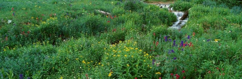 Flusso e fiori alpini fotografia stock libera da diritti