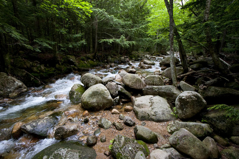 Flusso e foresta fotografia stock libera da diritti