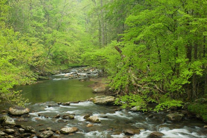 Flusso in foresta, sorgente immagine stock libera da diritti