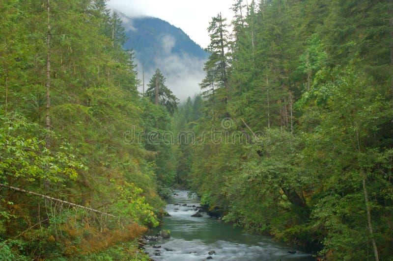 Flusso nella foresta immagini stock libere da diritti