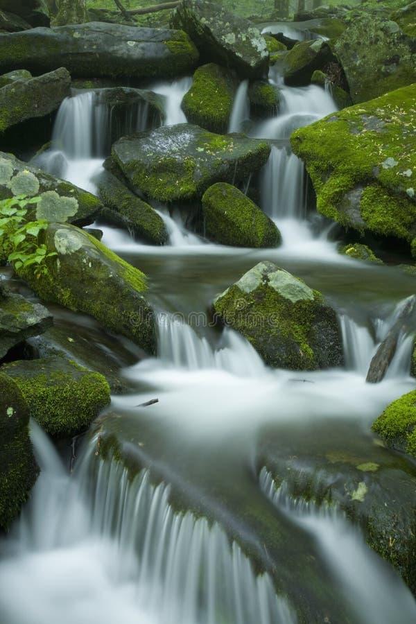 Flusso, paesaggio della sorgente, grande Mtns fumoso NP immagine stock