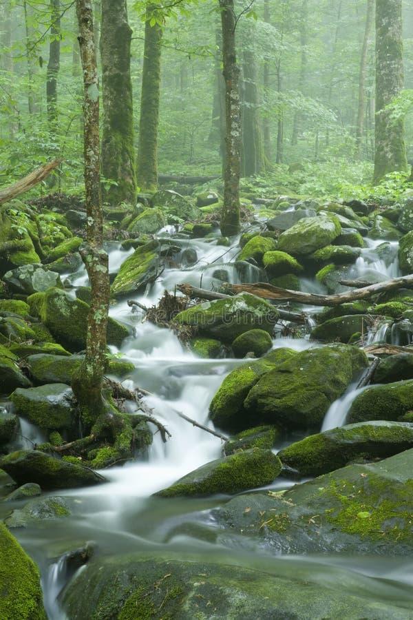 Flusso, paesaggio della sorgente, grande Mtns fumoso NP immagini stock