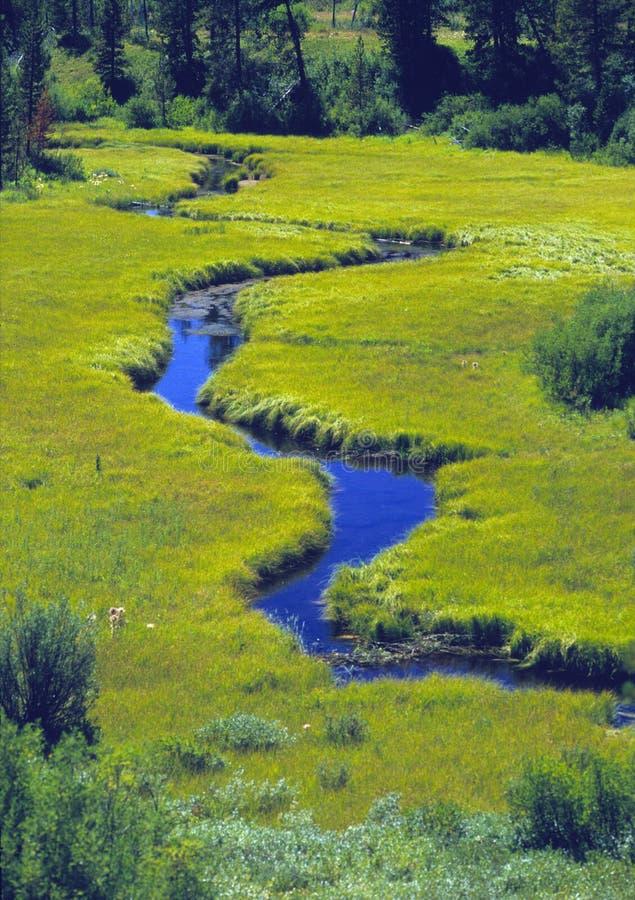 Flusso Serpeggiante Attraverso Un Prato Fotografie Stock Libere da Diritti