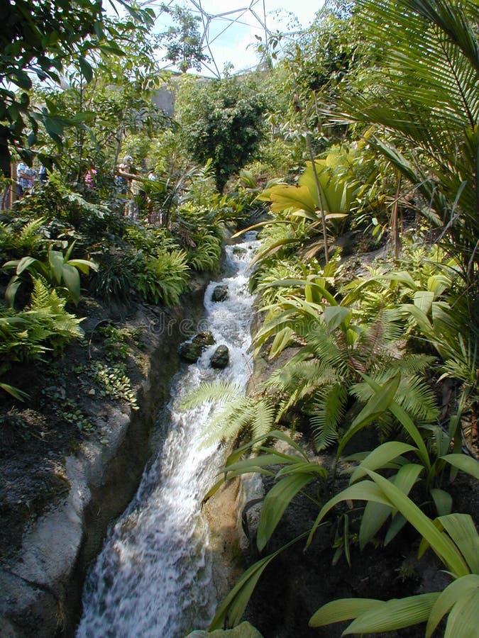 Flusso In Un Bioma 2 Fotografie Stock Libere da Diritti