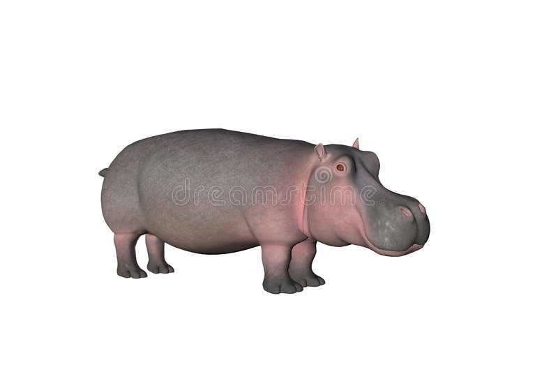 Flusspferd eins vektor abbildung