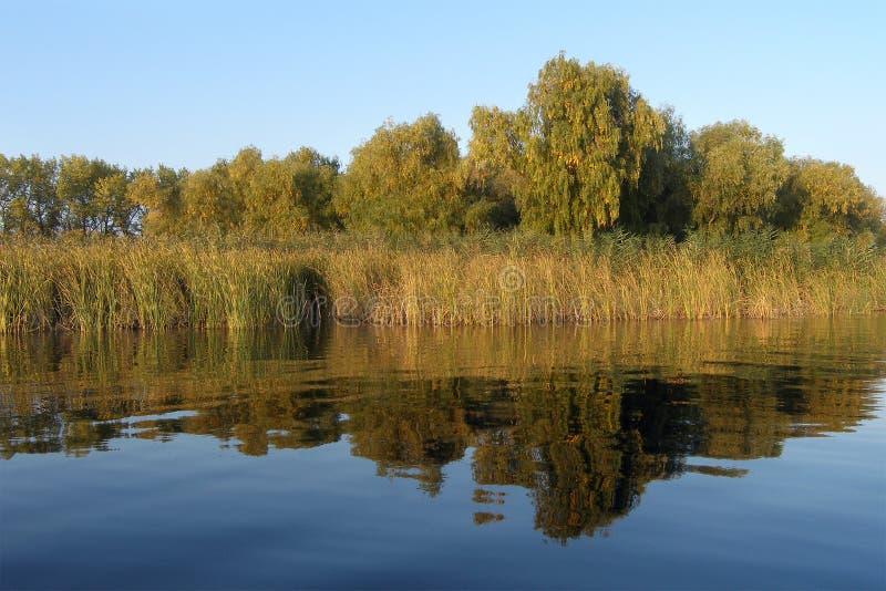 Flussquerneigung mit Bäumen lizenzfreie stockbilder