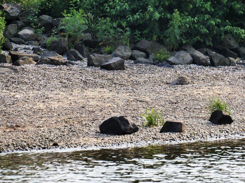 Flusssteine auf dem Strand von einem Fluss, von großen Steinen und von Büschen im Hintergrund, in den mittleren Oberteilen von Mi lizenzfreies stockbild