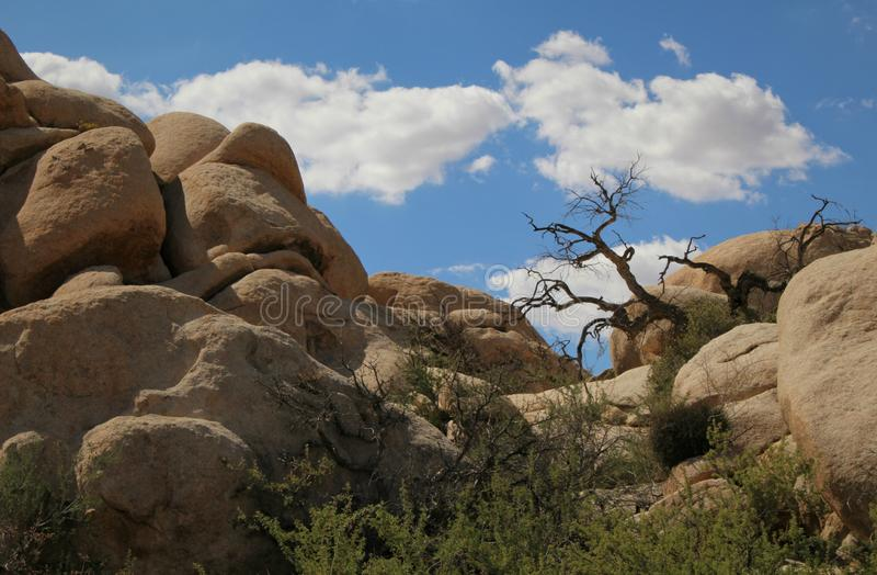 Flusssteine am Marktschreier Dam, Joshua Tree National Park, Kalifornien stockbilder