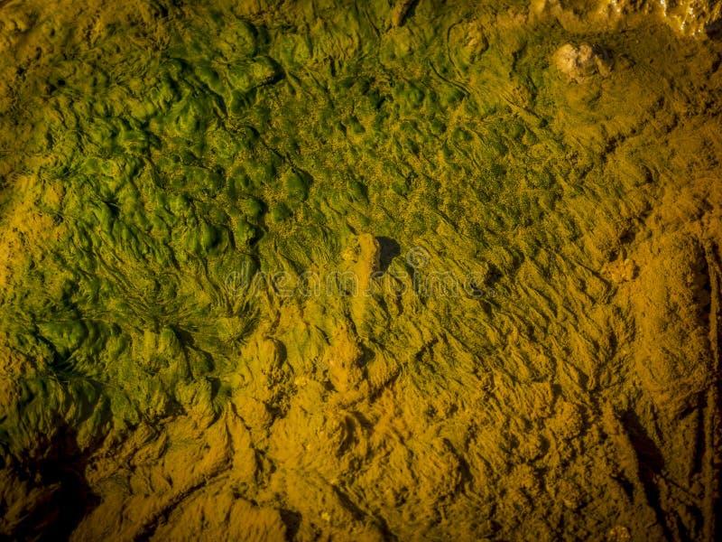 Flusswasser grün und gelb stockbild