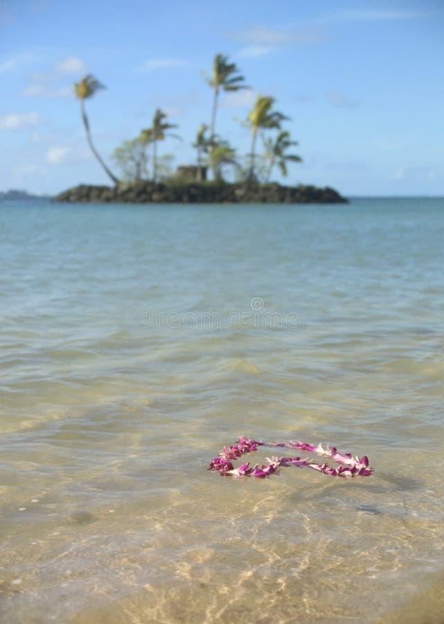 Flutuação cor-de-rosa da festão da flor imagem de stock