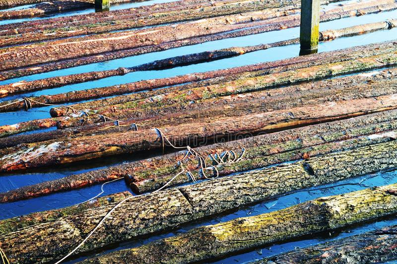 Flutuação de madeira, na vila de Zaanse Schans foto de stock royalty free