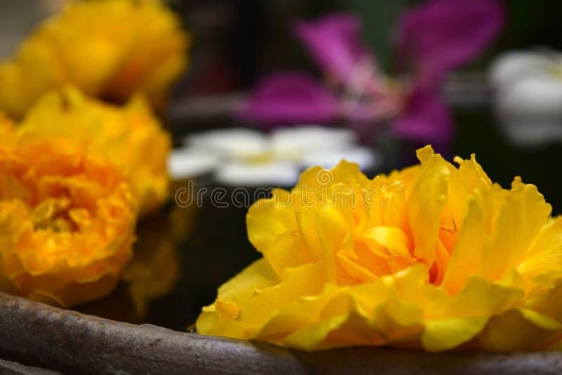 Flutuador das flores fotografia de stock