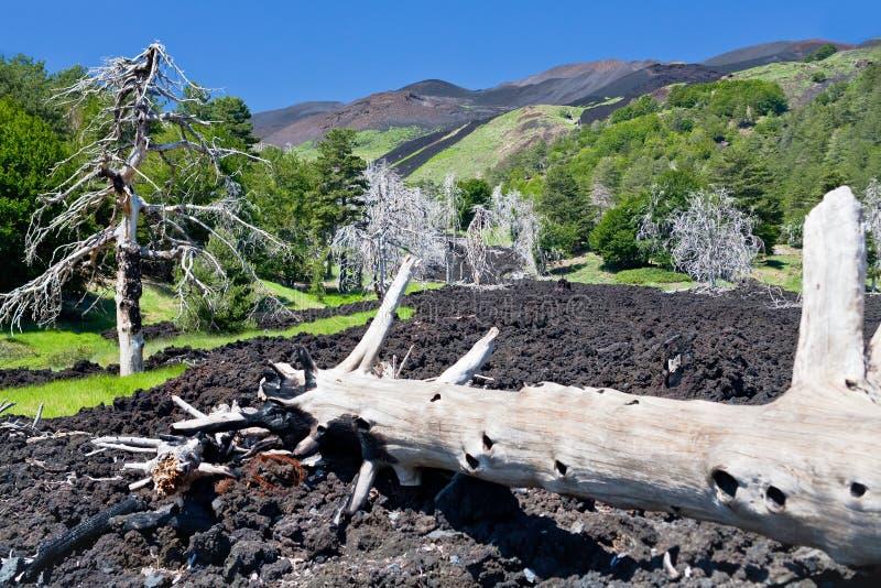 Flux de lave durci sur la pente verte de l'Etna, Sicile photographie stock libre de droits