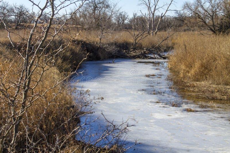 Flux gelé et acridien épineux, Kansas rural photo stock