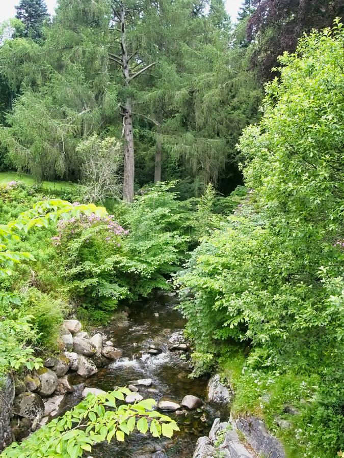 Fluxo arredondado por árvores nos planaltos escoceses fotografia de stock