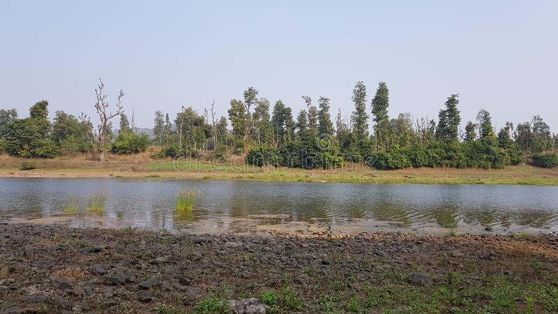 Fluxo do rio com a floresta na parte traseira fotos de stock royalty free