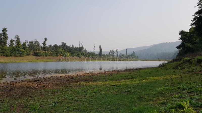 Fluxo do rio com a floresta na parte traseira fotos de stock