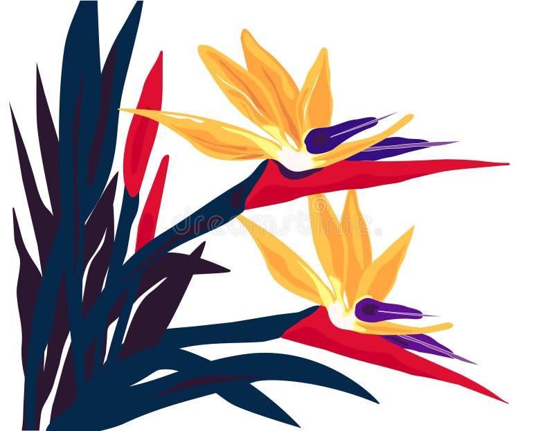 Fluxo isolado do Pássaro--Paraíso ilustração stock
