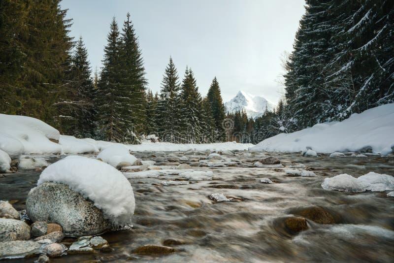 Fluxos de água no rio da floresta de inverno, pedras cobertas de neve, árvores de ambos os lados, símbolo do Monte Krivan Eslovac fotografia de stock royalty free