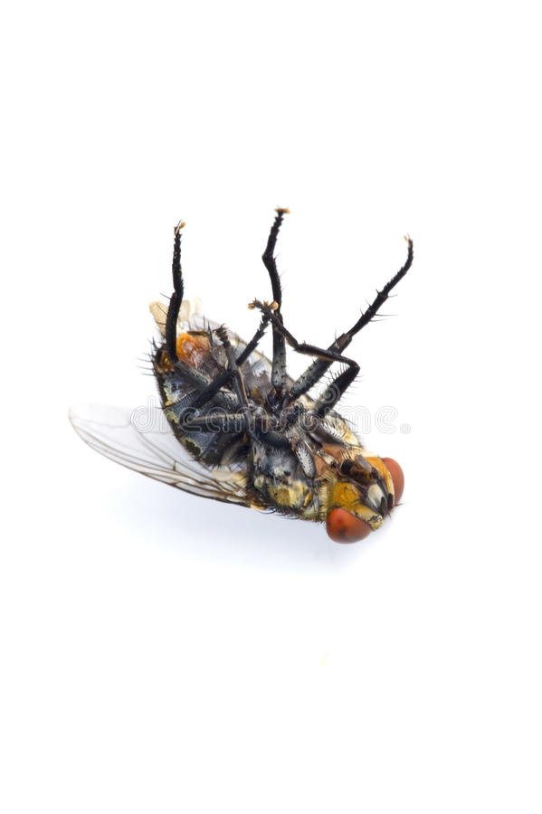 Download Fly Royalty Free Stock Photography - Image: 11871497