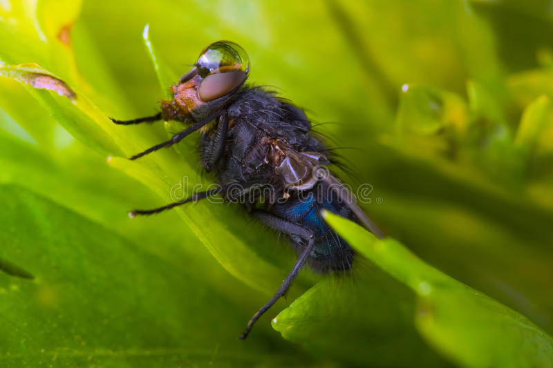 Download The fly stock image. Image of background, virus, drop - 13334077