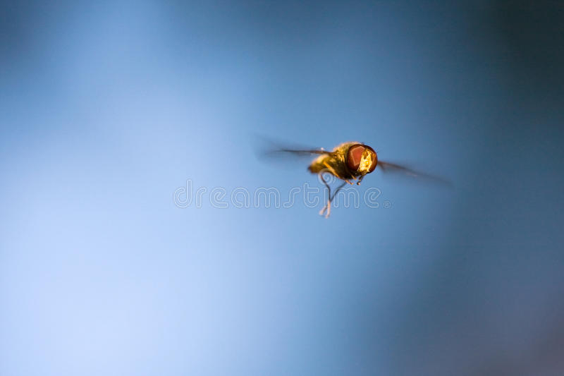 Download Fly Stock Images - Image: 14908114