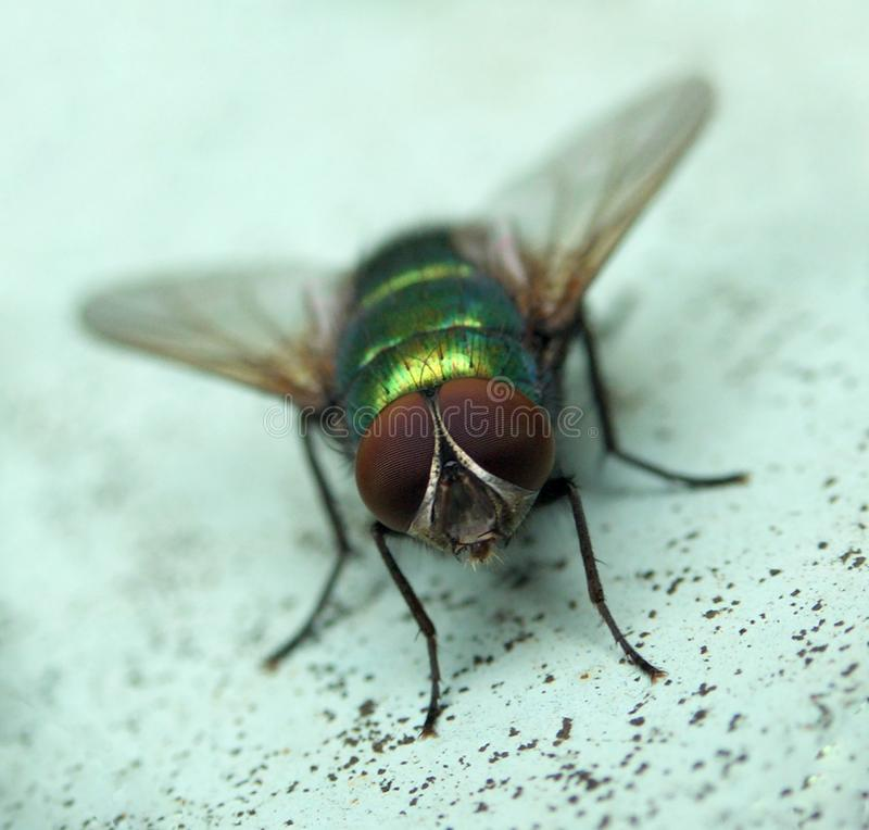 Fly......(2) Stock Image