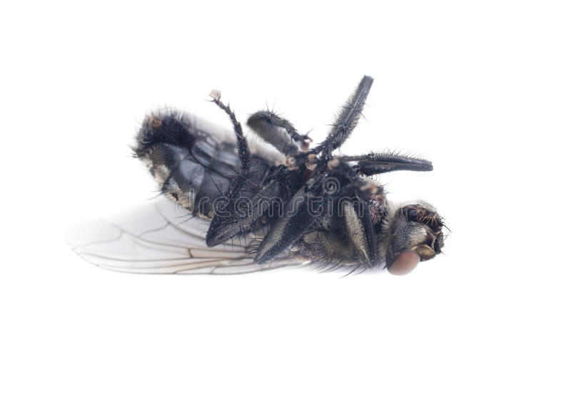 Download Fly stock photo. Image of creepy, close, lonely, disturb - 20997882