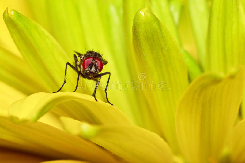 A Fly Stock Images