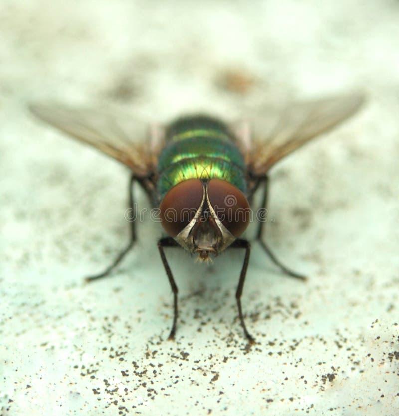 Free Fly......(4) Stock Photos - 164443