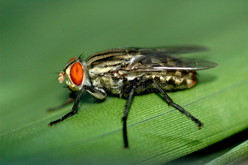 Download The fly stock image. Image of resting, close, wings, buzz - 4170649