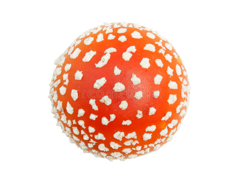 Download Fly agaric stock image. Image of color, poison, nature - 21051013
