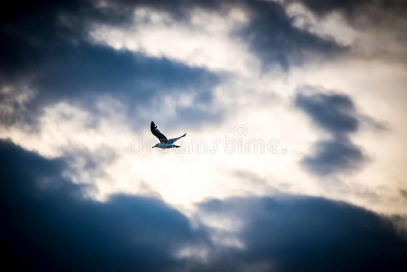 Fly away before the storm is coming royalty free stock images