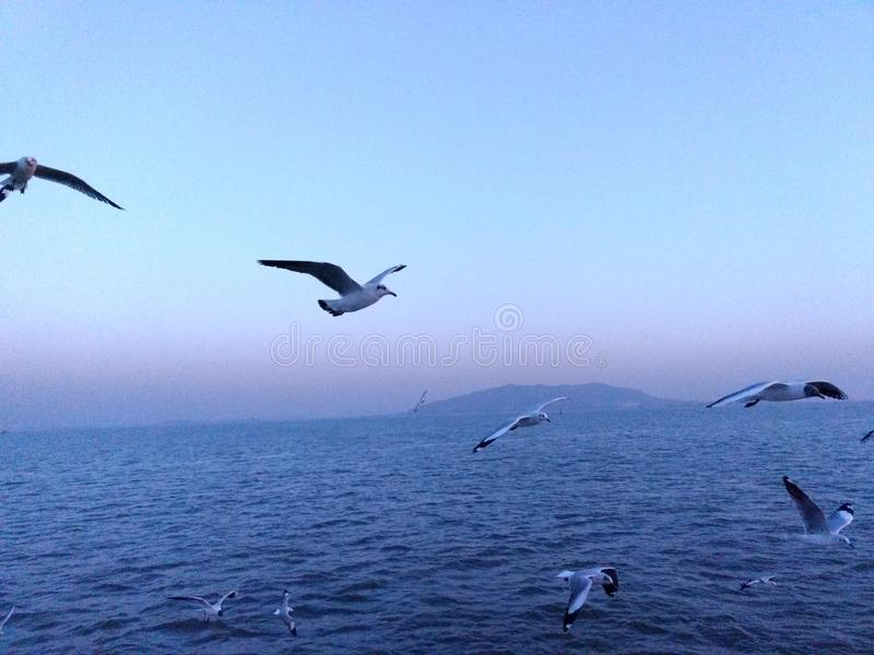 Fly back home. Birds are flying back home. Sky is reflecting sea stock photo