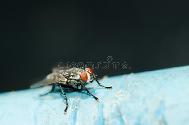 Fly stock images