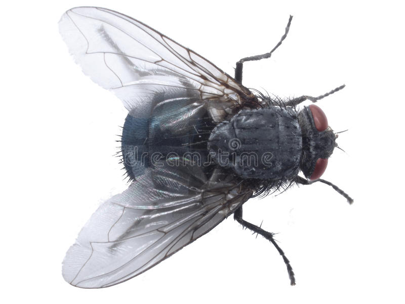 Fly closup royalty free stock photography