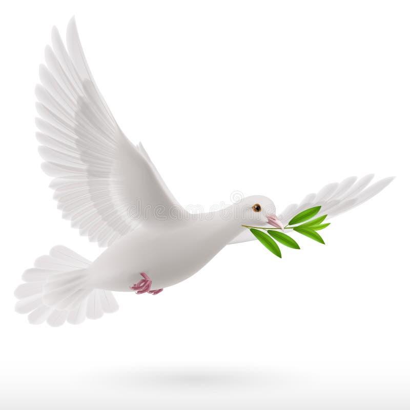 Fly dove vector illustration