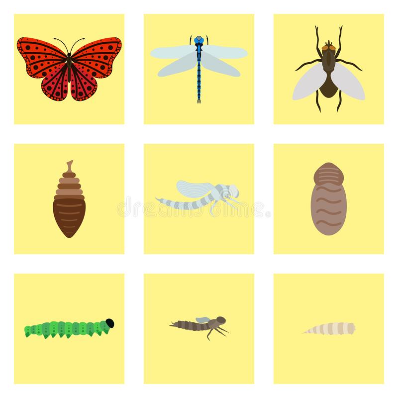 Fly dragonfly butterfly emerging from chrysalis four stages amazing moment about bugs change insect birth life vector. stock illustration