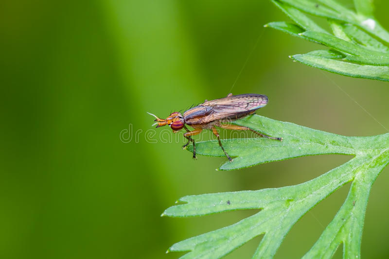 Download Fly stock photo. Image of macro, colourful, wood, flies - 32240438