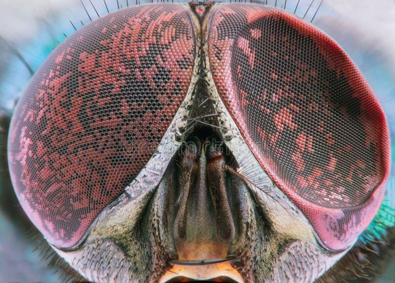 Fly extreme closeup of damaged compound eye stock photography