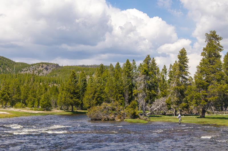 Fly fisherman fishing in Madison river Yellowstone park USA royalty free stock images
