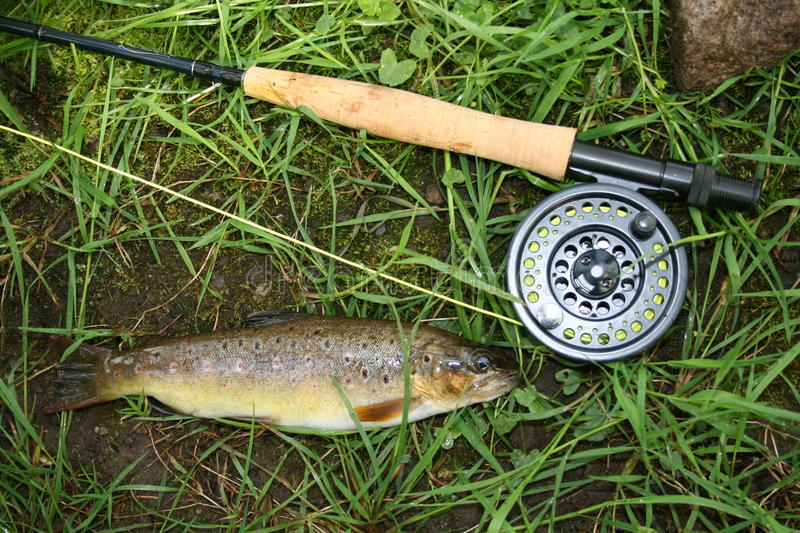 Fly Fishing Brown Trout stock images