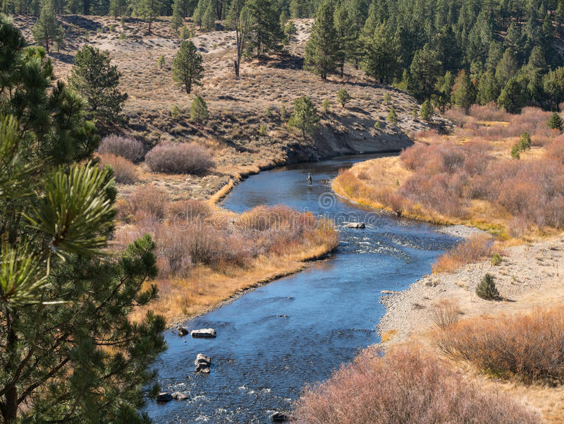 Fly fishing on the Little Truckee River royalty free stock photography