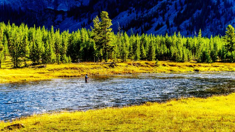 Fly fishing in the Madison River as it flows through the western most part of Yellowstone National Park. Along Highway 191 in Wyoming, United States of America royalty free stock image
