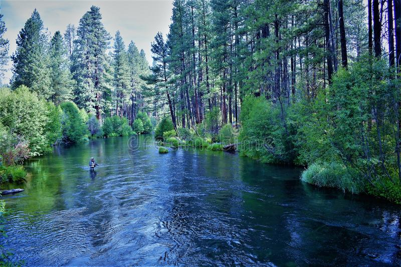 Fly fishing the Metolius. A fisherman casts his line in the beautiful Metolius River that runs through a lush forest nears Sisters, Oregon stock image